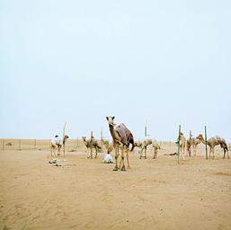 砂漠で#2 / 2006年 /(C)2009.NOGUCHI RIKA ALL Rights Reserved.